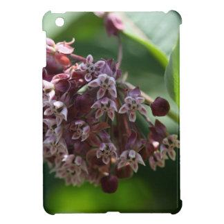 Ajenjo meridional (abrotanum de la artemisia)