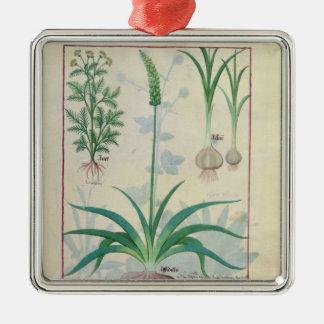 Ajo y otras plantas ornamentos de reyes magos