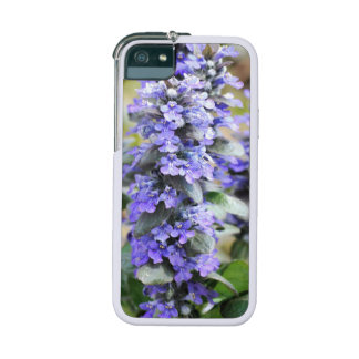 Ajuga Flowers Cover For iPhone 5