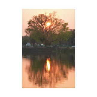 Ajuste de Sun detrás del árbol Lona Envuelta Para Galerias