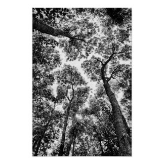 Ajuste natural tops del árbol poster