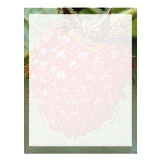 Akala, hawaiiensis del Rubus Plantilla De Membrete