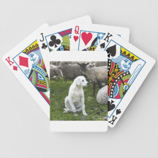 Akbash Dog and Sheep Herd Bicycle Playing Cards
