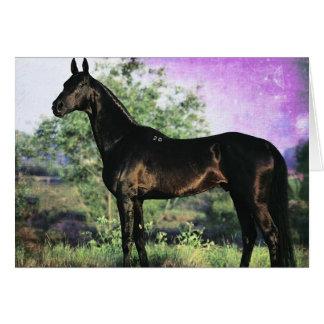 Akhal-teke Stallion Card