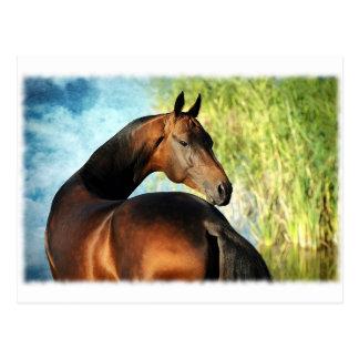 Akhal-teke stallion postcard