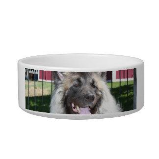 Akita dog bowl
