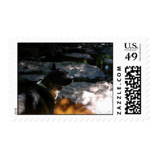 Akita Dog In The Forest Custom Postage Stamps