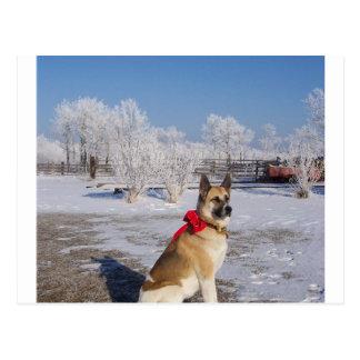 Akita en snow.png tarjetas postales
