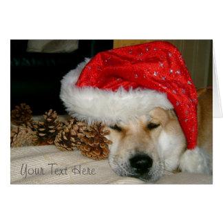 Akita lindo en el gorra rojo de santa con los tarjeta pequeña