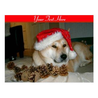 Akita lindo en el gorra rojo de santa con los tarjetas postales