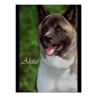 Akita Lovers Posters and Prints