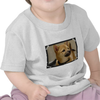Akita Pictures  Baby T-Shirt