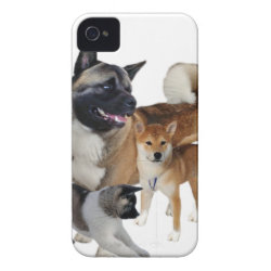 Akita Play iPhone 4 Cover