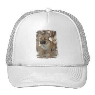 Akita Puppy Basebal Hat