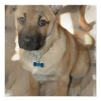 Akita Puppy Invitation