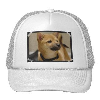 Akita representa el gorra de béisbol