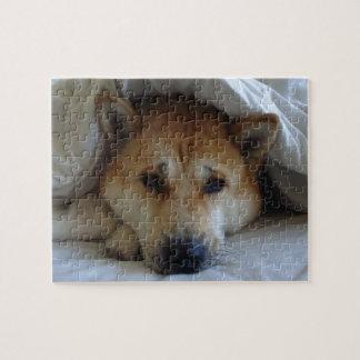 Akita rojo lindo que mira furtivamente de debajo puzzles con fotos