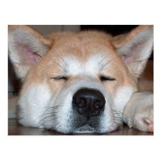 Akita sleeping.png tarjeta postal