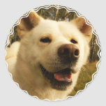 Akita Stickers