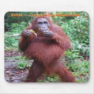 Akmad Pregnant in Tanjung Puting Park Mousepad