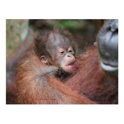 Akmad's New Baby Son at Camp Leakey Post Cards