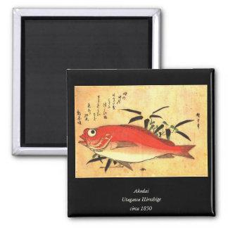 Akodai - impresión japonesa del siglo XIX colorida Imán Cuadrado