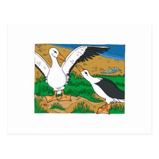 Al Ally Albatross Postcard