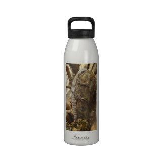 Al este lagarto rodeado tropical Espinoso-Atado af Botellas De Agua Reutilizables