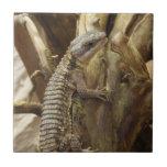Al este lagarto rodeado tropical Espinoso-Atado af Azulejos Ceramicos