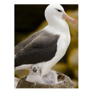 Al sur Atlántico, Islas Malvinas, nueva isla. 2 Tarjeta Postal