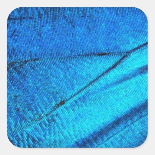 Ala azul iridiscente de la mariposa pegatinas cuadradases
