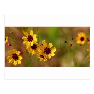 Alabama Golden Coreopsis tinctoria Wildflowers Postcard