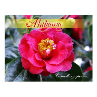 Alabama State Flower - Camellia Postcard