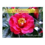 Alabama State Flower - Camellia Postcards