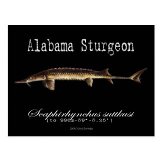 Alabama Sturgeon-Black-Postcard Postcard