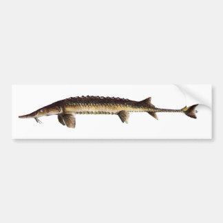 Alabama Sturgeon - Scaphirhynchus suttkusi Bumper Stickers