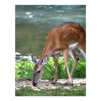 Alabama Whitetail Deer Letterhead