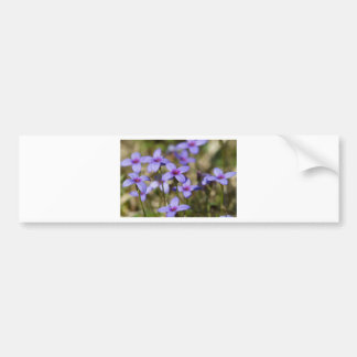 Alabama Wildflower Tiny Bluet - Houstonia pusilla Bumper Sticker