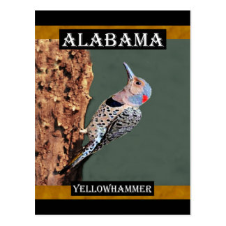 Alabama Yellowhammer Postcard