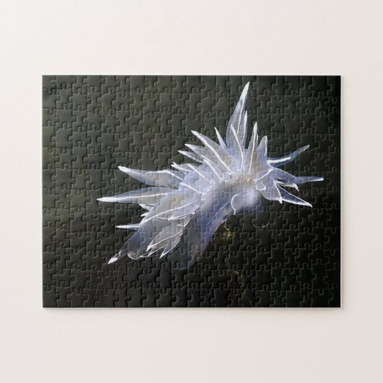 Alabaster Nudibranch Puzzle