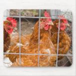 Alambre de pollo tapetes de ratones