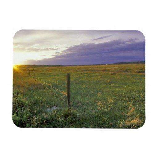 Alambre de púas Fenceline en Montana del noreste Imanes Flexibles