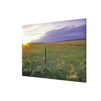 Alambre de púas Fenceline en Montana del noreste Impresion En Lona