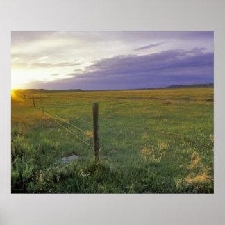 Alambre de púas Fenceline en Montana del noreste Póster