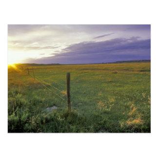 Alambre de púas Fenceline en Montana del noreste Tarjetas Postales