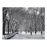 Alameda B&W del Central Park Postales