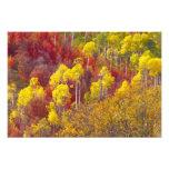 Álamos tembloses coloridos en el barranco Utah de  Arte Con Fotos