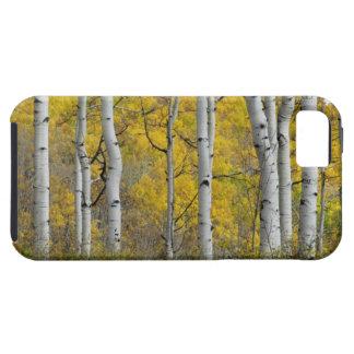 Álamos tembloses del otoño iPhone 5 fundas