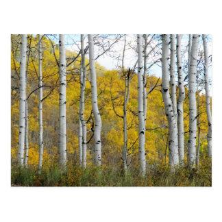 Álamos tembloses del otoño tarjetas postales