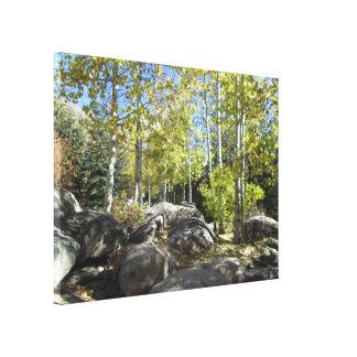Álamos tembloses en los jardines botánicos de lona envuelta para galerías